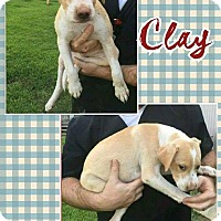 Adopt A Pet :: Clay meet me 9/9 - Manchester, CT