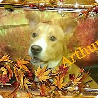 Adopt A Pet :: einstein - Gadsden, AL