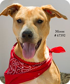 Retriever (Unknown Type)/Terrier (Unknown Type, Medium) Mix Dog for adoption in Baton Rouge, Louisiana - Moose