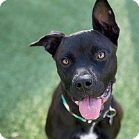 Adopt A Pet :: Dori - Durham, NC