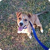 Adopt A Pet :: Tesla - Fayetteville, GA