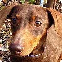 Adopt A Pet :: I'M ADOPTED Widget - Oswego, IL