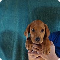 Adopt A Pet :: Nugget - Oviedo, FL