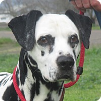 Adopt A Pet :: Pecas - Turlock, CA