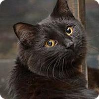 Adopt A Pet :: Eliah - Reston, VA