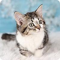 Adopt A Pet :: Maddie - Eagan, MN