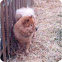 Adopt A Pet :: Fritz - Columbus, OH