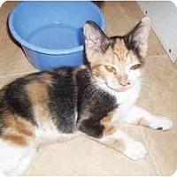 Adopt A Pet :: Callie - Hamburg, NY