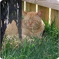 Adopt A Pet :: Sammy - Xenia, OH
