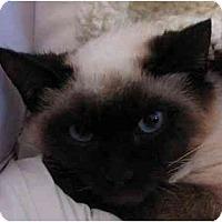 Adopt A Pet :: Kiyoshi - Davis, CA