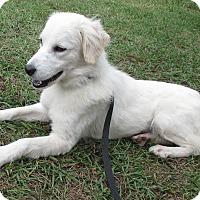 Adopt A Pet :: Oakley - Orange Park, FL