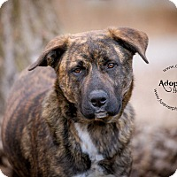 Adopt A Pet :: Jack - Warsaw, IN