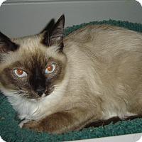 Adopt A Pet :: Loki - Mundelein, IL