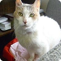 Adopt A Pet :: Donna - Hamburg, NY