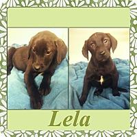 Adopt A Pet :: Lela-pending adoption - Manchester, CT