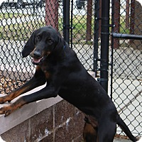 Adopt A Pet :: Mumford - Charelston, SC
