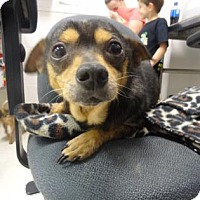 Adopt A Pet :: Jake - Gulfport, MS