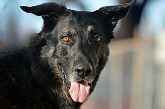 German Shepherd Dog Dog for adoption in Irvine, California - Max