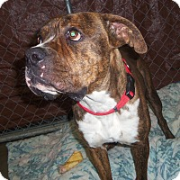 Adopt A Pet :: REESE - Medford, WI