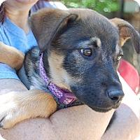Adopt A Pet :: Locket - Dripping Springs, TX