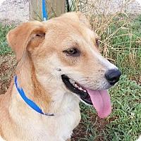Adopt A Pet :: Garrison 5.5 months old! - Rowayton, CT