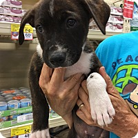 Adopt A Pet :: Ali - Hohenwald, TN
