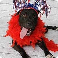 Adopt A Pet :: Jelly Bean - Titusville, FL