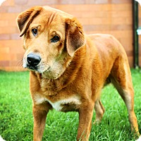 Adopt A Pet :: Reddington - Appleton, WI