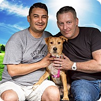 Adopt A Pet :: Rosalie - Adopted 08/20/2016 - Livonia, MI