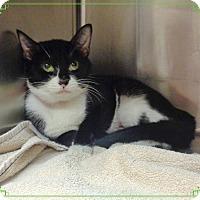 Adopt A Pet :: GLORIA - Marietta, GA