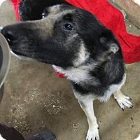 Adopt A Pet :: Baby Girl - Savannah, GA