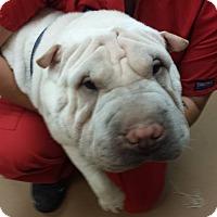 Adopt A Pet :: Asher - Gadsden, AL