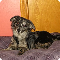 Adopt A Pet :: Hope - New Middletown, OH
