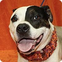 Adopt A Pet :: Titan - Jackson, MI