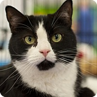 Adopt A Pet :: Ivan - Great Falls, MT