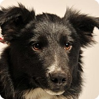 Adopt A Pet :: Wylie - Danbury, CT