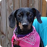 Adopt A Pet :: MAYA JANE - Portland, OR