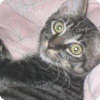 Adopt A Pet :: Ringo - Tomball, TX