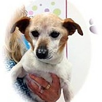 Adopt A Pet :: Mr Magoo - calimesa, CA
