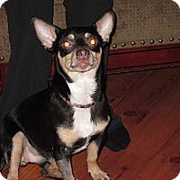 Adopt A Pet :: eddie - Cleveland, OH