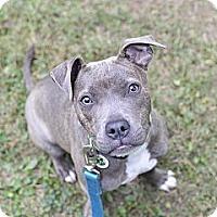 Adopt A Pet :: Piper - Des Peres, MO