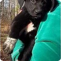 Adopt A Pet :: Destiny - Allentown, PA