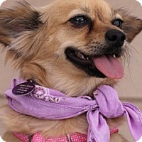 Adopt A Pet :: Becca ~ Sadie's Rescue - San Angelo, TX