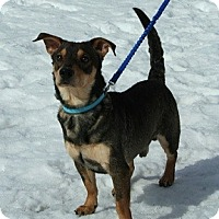Adopt A Pet :: Sparky - Hamilton, ON