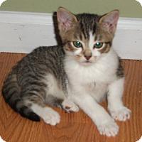 Adopt A Pet :: Tiffan - Colmar, PA