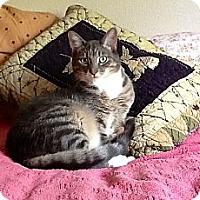 Adopt A Pet :: Leo - Novato, CA