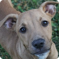 Adopt A Pet :: Chester - North Olmsted, OH