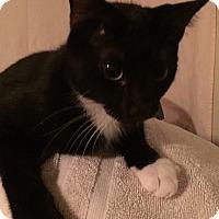 Adopt A Pet :: Tucker - La Canada Flintridge, CA