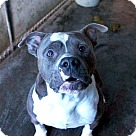 Adopt A Pet :: Zolo - Henderson, NC
