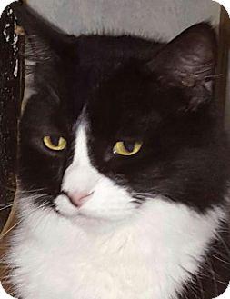 Domestic Shorthair Cat for adoption in New Bedford, Massachusetts - Zena